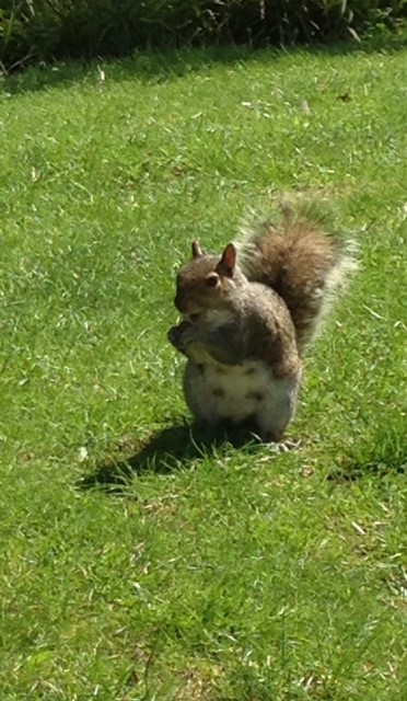 cp squirrel